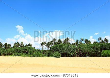 Tropical vegetation on the Bentota beach
