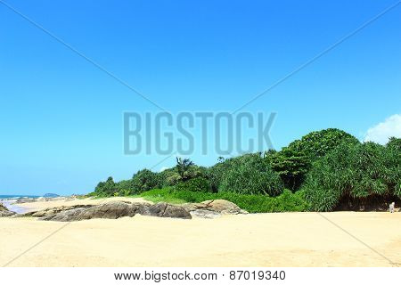 Tropical vegetation on the shores of the Indian ocean