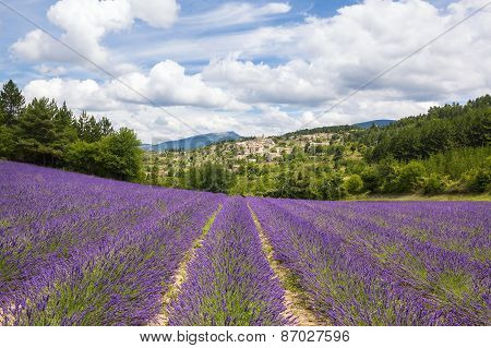 Lavender Field And Village