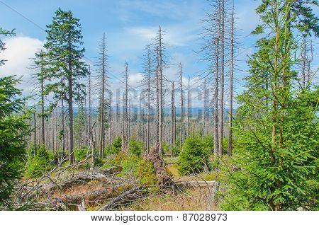 Old forest landscape.
