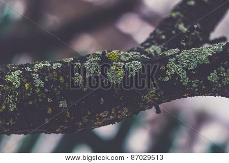 Vintage Leafless Branches