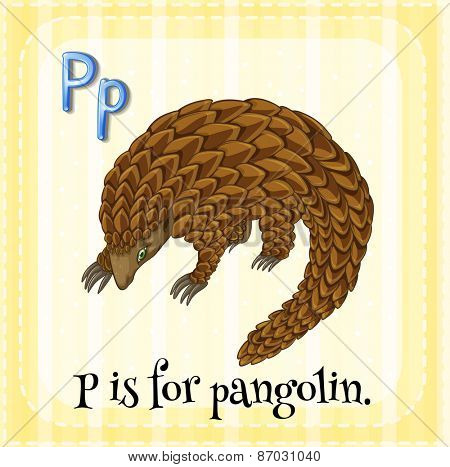 Flashcard letter P is for pangolin