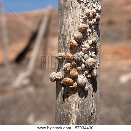 Snail shells on a wooden post