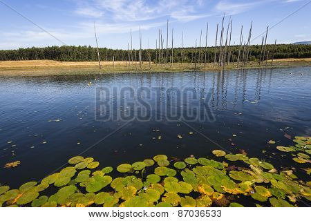 Lake Water Trees Landscape