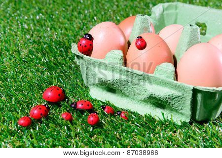 Six Fresh Eggs In A Box