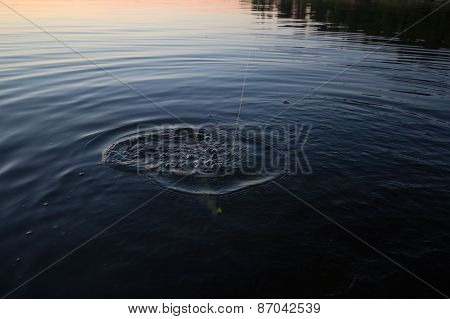 Sunset River Perch Fishing With  And A Rod