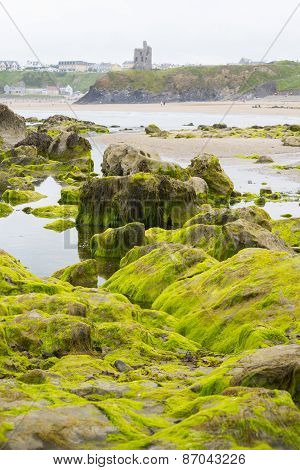Ballybunion Castle Algae Covered Rocks View