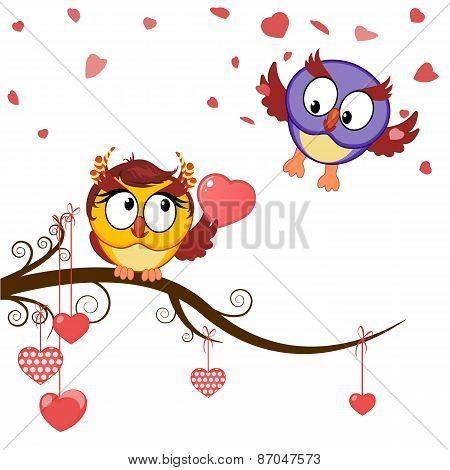 Card Funny Owls Declaration Of Love