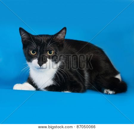 Frightened Black And White Kitten Lying On Blue