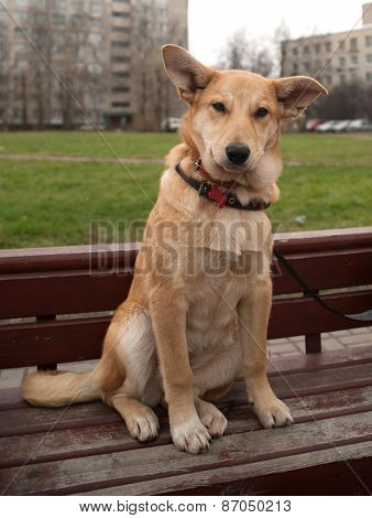 Small Yellow Dog Collar Sitting On Bench