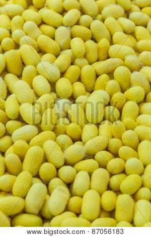 Yellow Silk Cocoons (thailand)