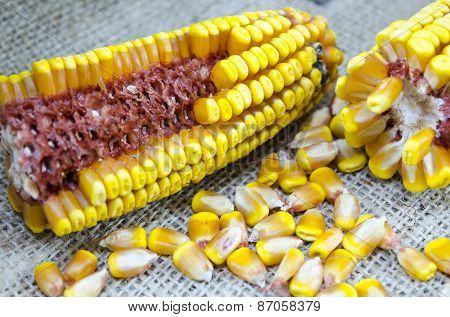 Corn Cobs And Corn Grains On A Tablecloth