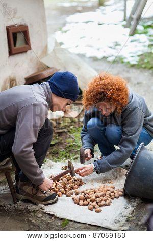 Family Of Farmers Crushing Walnuts