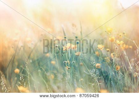 Soft focus on yellow flowers (springtime)