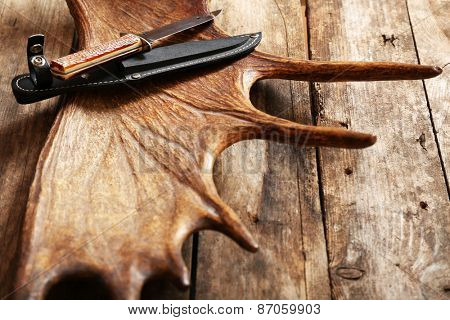 Moose antler with hunting knives on wooden background