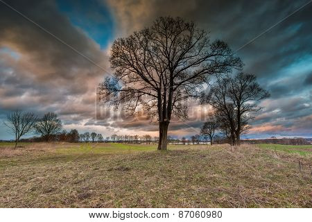 Stormy Sky Over Field And Trees