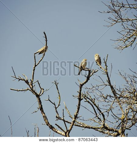 Birds At Tree