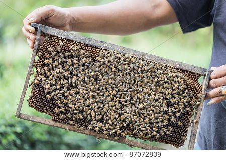 Hands Holding Honeycomb