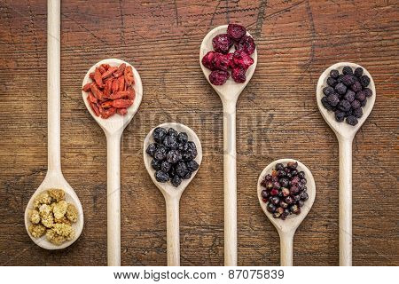 healthy dried berry collection (blueberry, mulberry, cherry, goji, elderberry, chokeberry,) on  wooden spoons against rustic wood