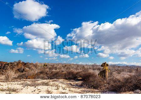 Desert Galapagos Landscape