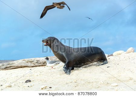 Sea Lion And Birds