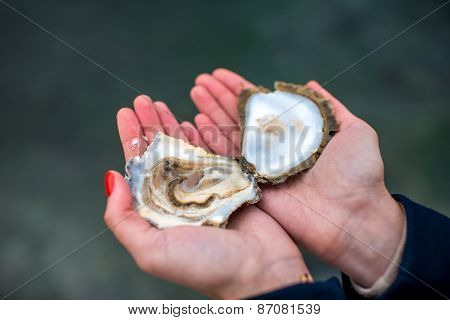 Oyster in hands