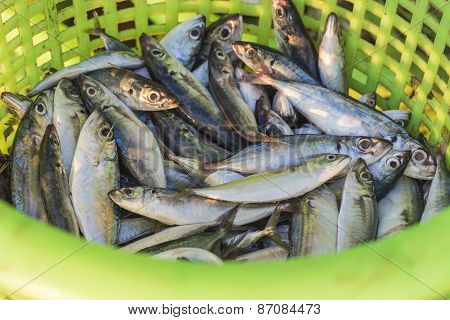 Fresh Fish In Plastic Basket