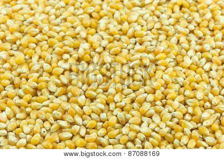 Yellow Grain Corn