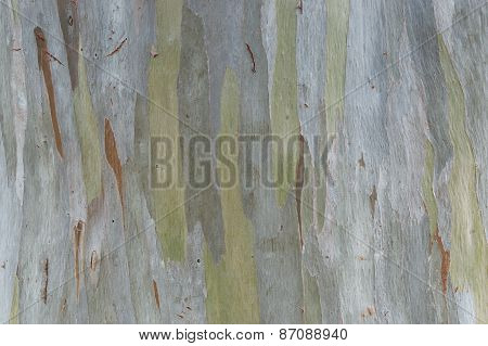 Green Tree Bark Texture