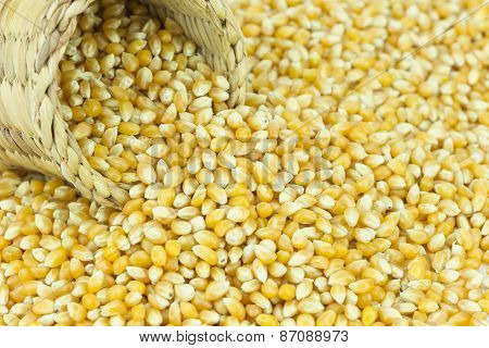 Yellow Grain Corn