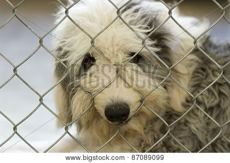 Sheepdog Sad Dog And Fence