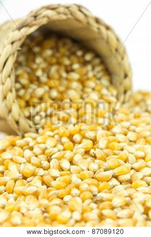 Close Up Yellow Grain Corn