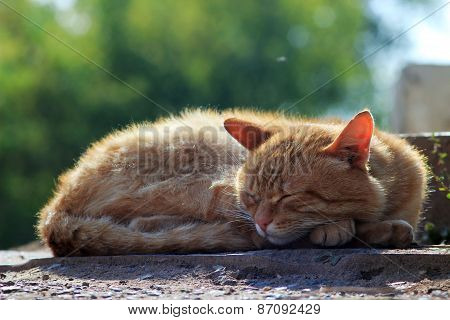homeless cat sleeping on the street