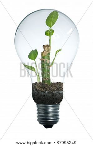 Lightbulb And Plant
