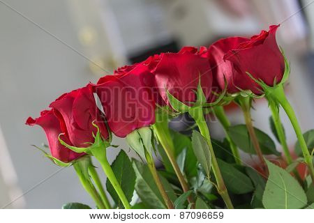 Roses in a bunch