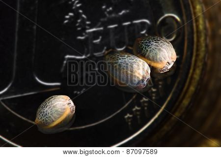 Three Hemp Seeds On One Euro Coin