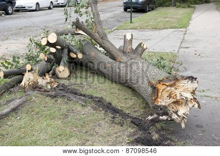 Broken Tree Stump