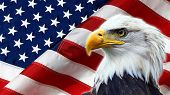 stock photo of eagles  - North American Bald Eagle on American flag - JPG