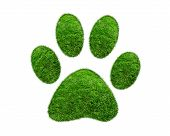 picture of footprint  - Grass patches shaped like pet paw prints - JPG