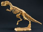 picture of darwin  - dinosaur Tyrannosaurus T Rex statuette skeleton on black background t - JPG