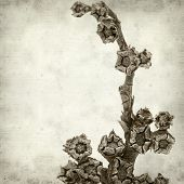 stock photo of rosettes  - textured old paper background with dry rosette of Aizoon canariense canarian iceplant - JPG