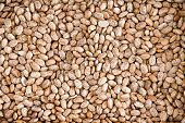 stock photo of pinto bean  - Healthy Brown Pinto Beans with High Fiber and Low Fat Contents used for Wallpaper Backgrounds - JPG