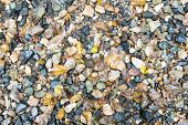 picture of fallen  - Plenty of Wet Small Rocks and Fallen Leaves for Wallpaper Backgrounds Captured in High Angle View - JPG