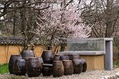 picture of korean  - Traditional garden with korean clay jars with a cherry blossom behind - JPG