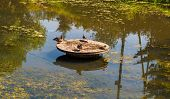 stock photo of duck pond  - four ducks sitting on a wooden circle in the middle of the pond and preen their feathers  - JPG