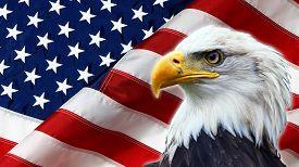 stock photo of eagles  - North American Bald Eagle on American flag - JPG