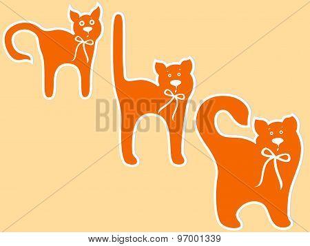 Cat Maturing Stages
