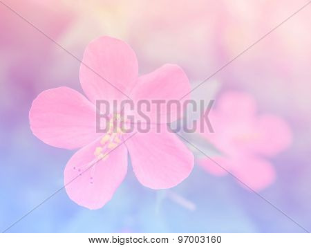 Abstract Blurry Hibiscus Flower Colorful Background.