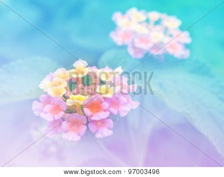 Abstract Blurry Lantana (phakakrong Flowers In Thai).