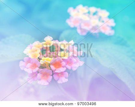 Abstract Blurry Lantana (phakakrong Flowers In Thai).